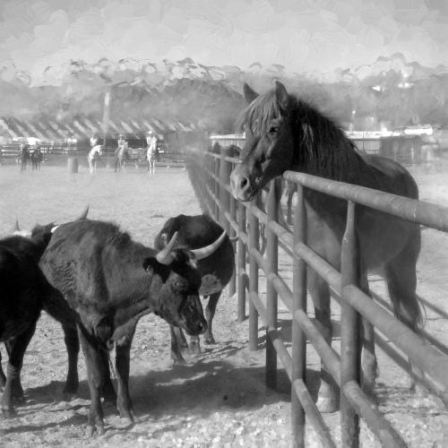horsepen